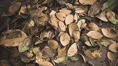Green Leaf Texture. Leaf Texture Background.green Leaf Texture. Leaf Texture Background.tropical Gre poster