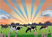 illustration with drove of cows on field