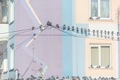 Pigeons Are Sitting On Wires. Many Birds Sit On Wires Near The House. Bird On The Roof Of The House. poster