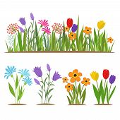 Early Spring Forest And Garden Flowers Isolated On White Vector Set. Illustration Of Nature Flower S poster