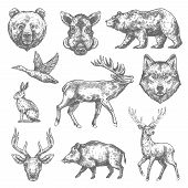 Wild Animals Sketch Icons Of Grizzly Bear, Aper Hog Or Boar And Elk, Rabbit Hare Or Duck And Wolf Or poster