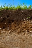 pic of earth structure  - A cut of soil with different layers visible - JPG