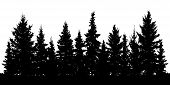 Forest Of Christmas Fir Trees Silhouette. Coniferous Spruce. Vector On White Background poster