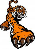 Tiger Mascot Body Prowling Graphic