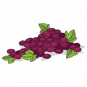 Isolate Ripe Grape Fruit On White Background. Close Up Clipart With Shadow In Flat Realistic Cartoon poster