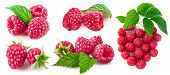 Set berry raspberry with green leaf. Collection fruit still life of fresh berries raspberry. Healthy poster