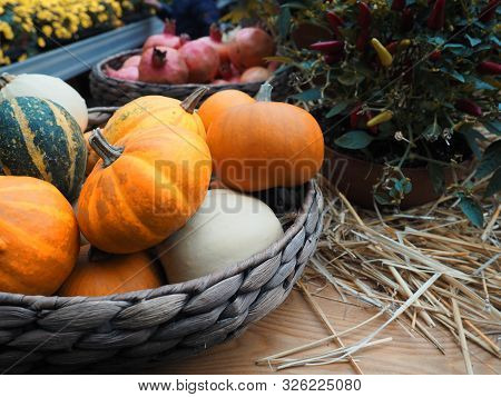 poster of Autumn Composition With Pumpkins, Straw And Maple Leaves.
