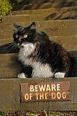 Beware Says Kitty