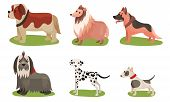 Vector Illustration Set With Dogs Breed Isolated On White Background poster
