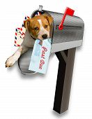 Puppy in the mailbox.