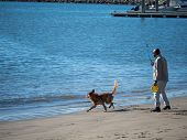 Golden Retriever Fetching Giving Chase To Ball Throw Into Ocean By A Man Playing Fetch poster
