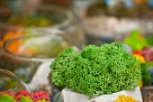 Texture Of Decorative Moss. Natural Moss Of Different Colors For Interior Design. Multicolored Moss  poster