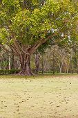 Bodhi tree and buddhist temple in wat in Thailand