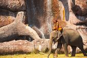 Elephant Walking Scenic Waterfall Cliff