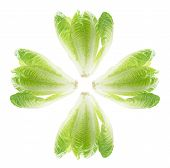 Cos Lettuce Leaves