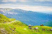 Norwegian Old Houses Hytte, Mountains Farm. Summer Landscape In Norway, Scandinavia poster