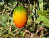 bunte Früchte