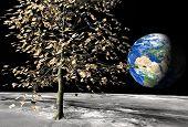 50 Euro Money Tree On The Moon