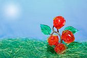 Rose Bush Grows To Sun