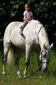 picture of bareback  - Little beauty satisfied girl riding bareback by big gray beautiful big horse with black bridle.