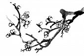 Chinese black and white traditional ink painting, plum blossom on white background.