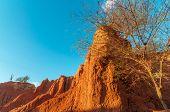 Desert Landscape In Golden Light