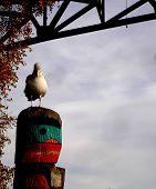 Orando gaivota