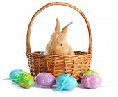 stock photo of tame  - Fluffy foxy rabbit in basket with Easter eggs isolated on white - JPG