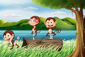 Illustration of three monkeys having fun