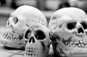 Cráneo de Homo Sapience