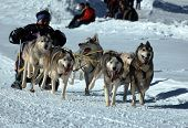Musher Race Action