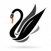 Imagem vetorial de cisnes