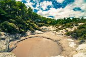 Thermal Mud Pool In New Zealand