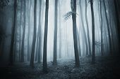 Dark scene of a forest with fog at evening