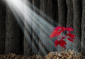 stock photo of tree leaves  - Great potential business metaphor with an old dark forest of tall trees and a young red leaf sapling emerging out of the ground as a symbol of future growth and hope for the future as an icon of investment growth and conservation of nature - JPG