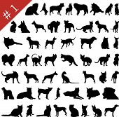 picture of cat dog  - Set different vector pets silhouettes for design use - JPG