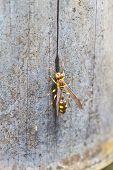 Hymenoptera Insect