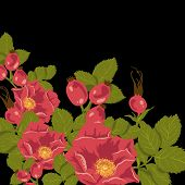 stock photo of wild-brier  - Floral background with wild rose - JPG