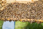stock photo of swarm  - Closeup of bees swarming on a honeycomb - JPG