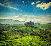 Vintage retro hipster style travel image of tea plantations with grunge texture overlaid. Munnar, Kerala, India