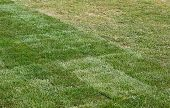 Lawn Of Grass Roll