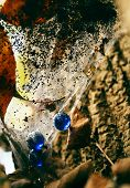 picture of spiderwebs  - spiderweb and placed marbles in nature abstract - JPG
