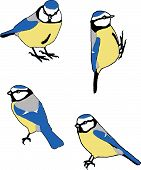 vector of bluetit bird