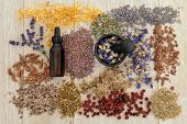 Herbal medicine selection also used in magical potions over oak background.
