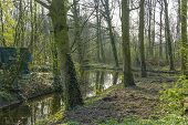Canal Meandering Through The Spring Forest