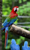 Green-winged Macaw Perching On The Branch With Very Nice Details And Background, Colorful Macaw, Wit