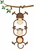 Monkey hanging and holding monkey