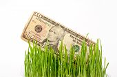 Growing dollars. The vegetation of dollar bills on the green grass