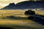 Bashang scenery