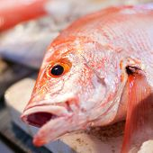 Red Snapper On Market, Closeup